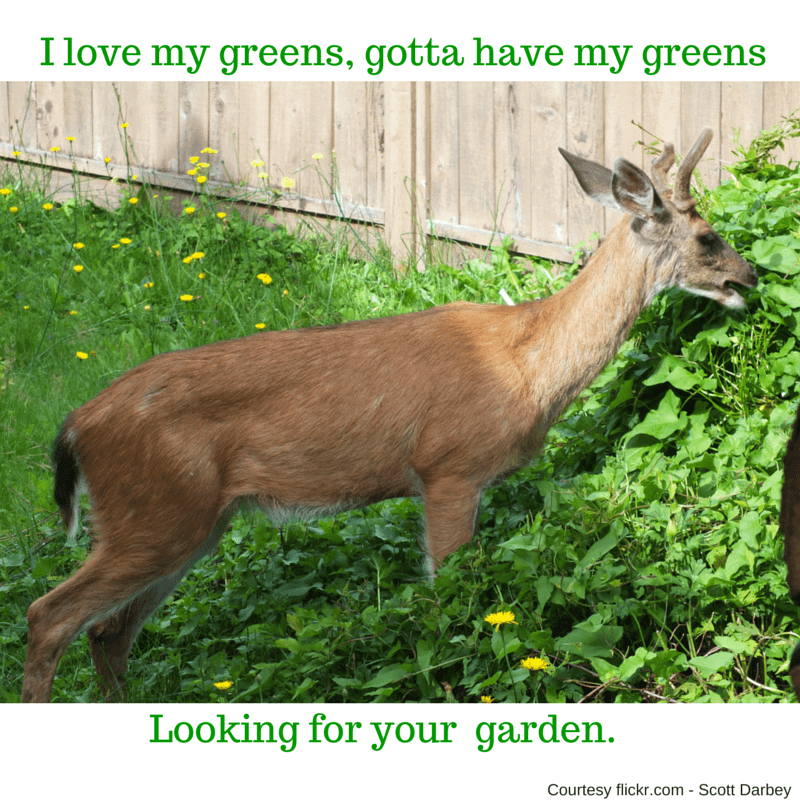 Deer eating compost - canva